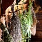 Uchovávání bylinek