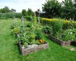 Výluh z kopřiv určený ke hnojení