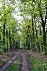 hřbitovní alej