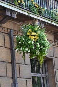 jednou napíšu článek jenom o závěsných květinových koších, je jich plná Anglie, fotek mám spousty