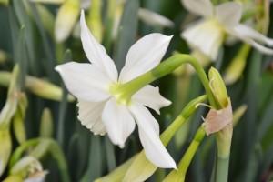 bílý do svatební kytice