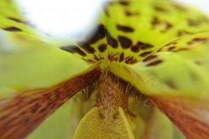 kousek pasťového květu