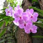 Orchideje ve Fata Morganě
