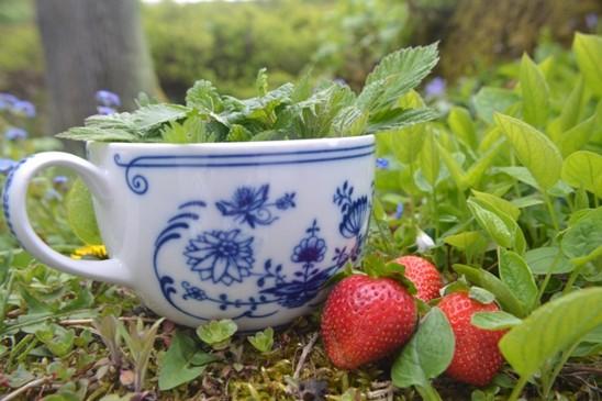 Kopřivový čaj s ostružinovými listy
