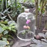 Výstava orchidejí Na Slupi