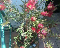 Květa Hurecká 4
