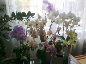 Květa Hurecká3