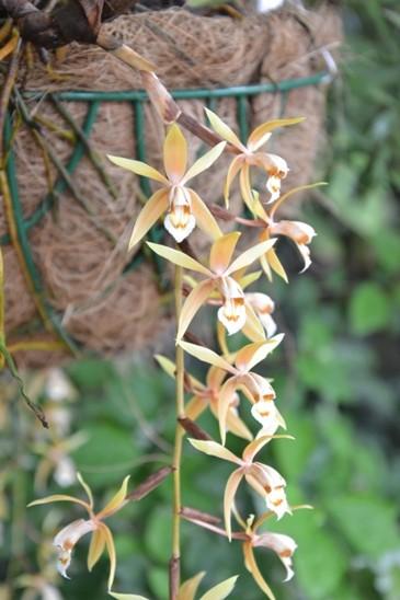 Orchideje Ve Fata Morganě Aubrieta Cz