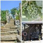 Vinařství U Rytířů