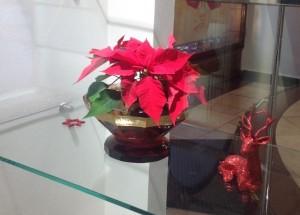vánočníhvězda3