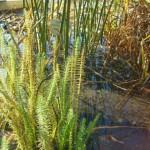 Přezimování vodních rostlin